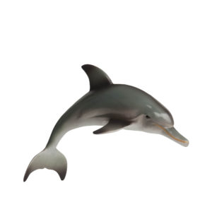 right side view of dolphin