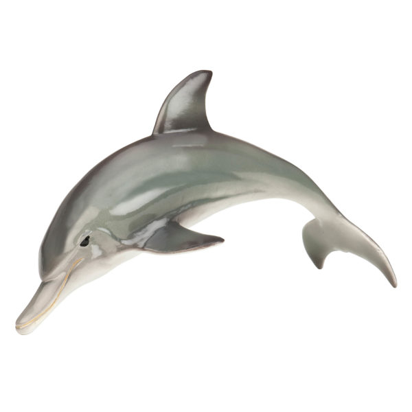 side view of dolphin