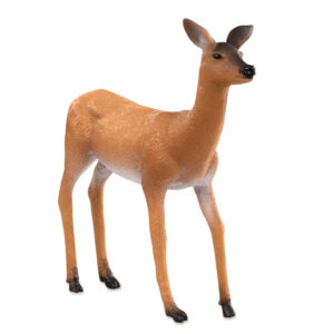 side view of white tailed doe
