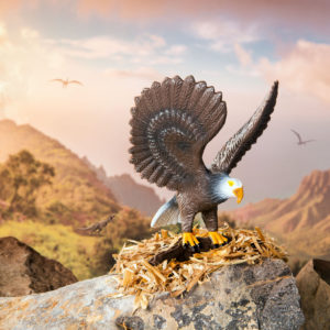 eagle in a mountain setting