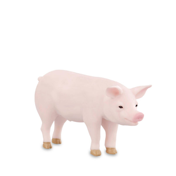 side view of pig