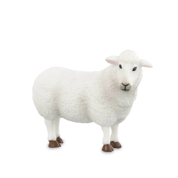 side view of sheep