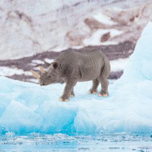rhino in nature setting