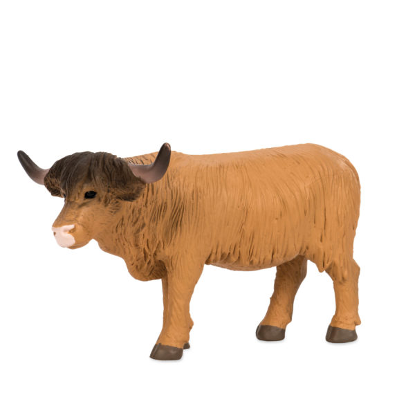 side view of a highland cow