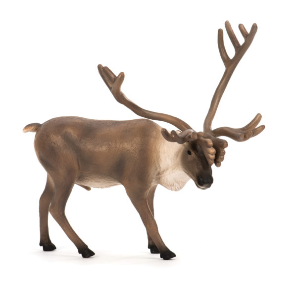 side view of caribou