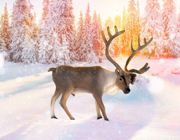 caribou in a snowy nature setting