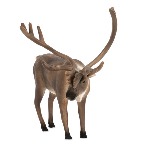 front view of caribou