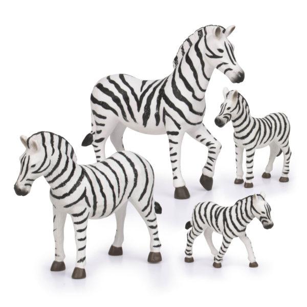 zebra white black