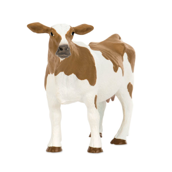 front view of Holstein cow