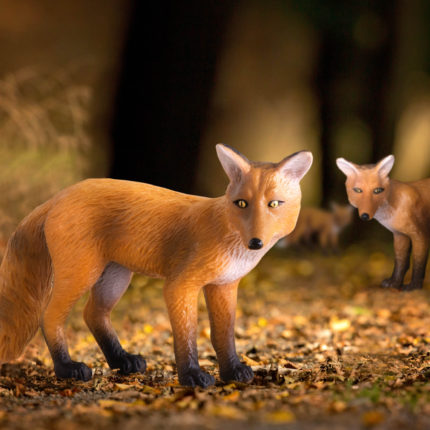 red foxes in forest at night.