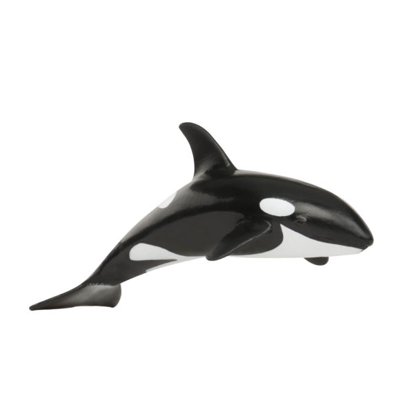 side view of Killer Whale