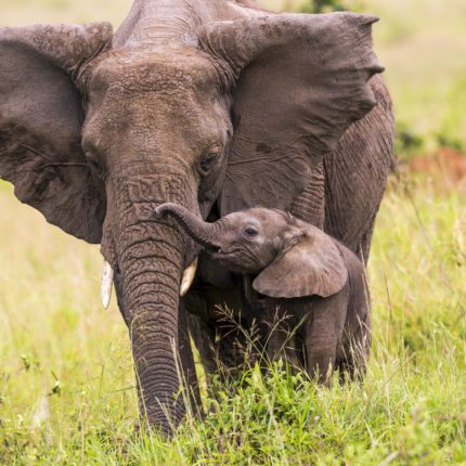 elephantandbaby_resize1
