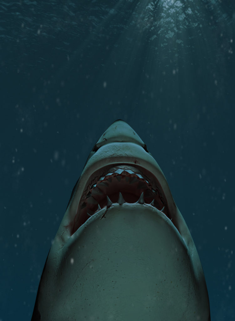 Great white shark swimming towards the surface with mouth open
